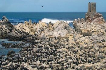 Penguins, Betty\'s Bay, Overberg, Whale Coast